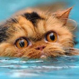 桑代克的猫