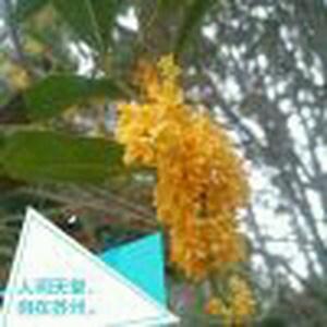 苏州De Lueng