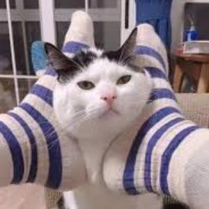 娱乐猫搞笑狗