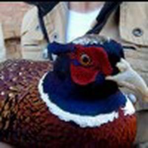 湖海农家山鸡