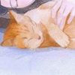 猫儿爷的可可布朗尼