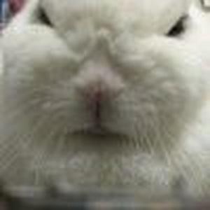 不吃醋的兔子