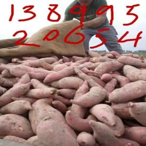 红薯种植《难忘红薯哥》