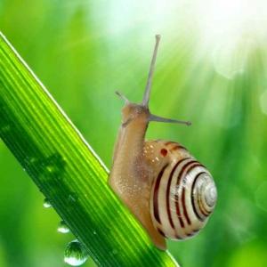 蜗牛的远征