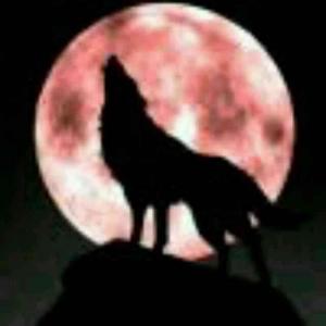 冬天里的狼