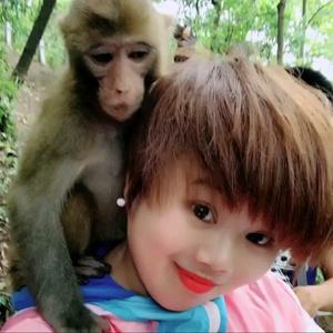 森林里的猴子管家