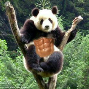 哈哈吼吼的大熊猫