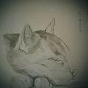 会画画的猫 ?