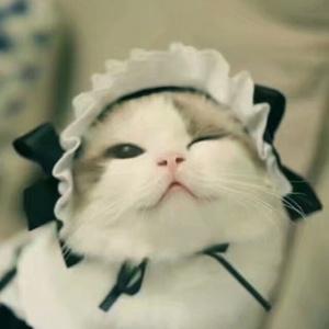 猫的恋人5257