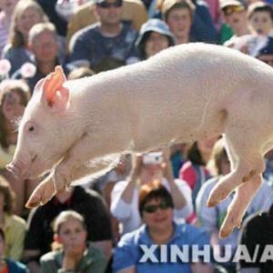 一隻特立独行的猪