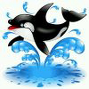 快乐的海豚