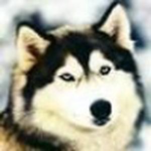 Rhythmwolf