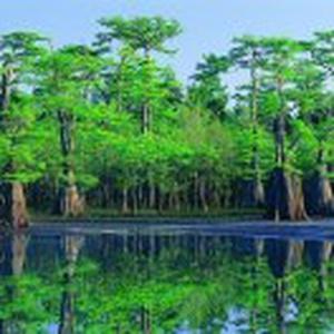 平安普惠张雨林