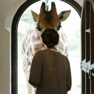 鹿要永远做我的彼得潘