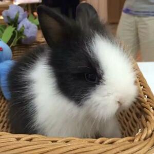 爱宝宠物兔