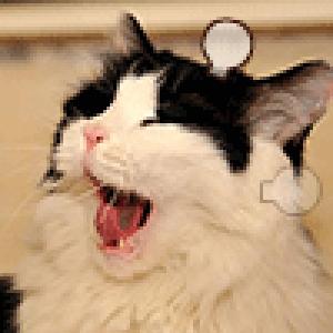 猫子谈游戏