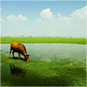 不吃草的牛