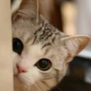 猫咪?宝呗