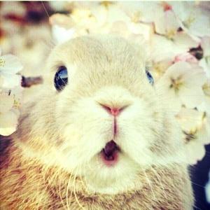 迷茫的胖兔子