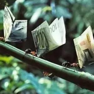 ……红飞蚂蚁