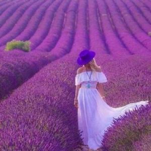 ? 紫色薰依草?