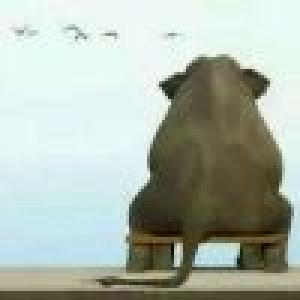 大   象