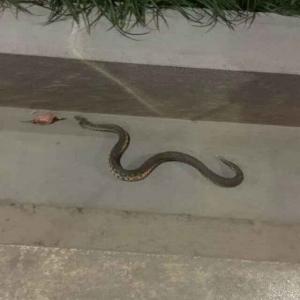 老蛇逗你玩