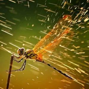 曉曉曉螞蟻蟻