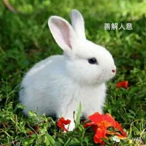 ~善解人意的!小白兔~