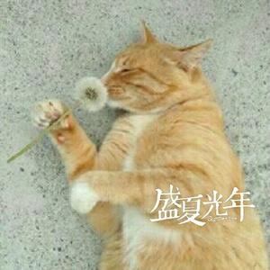 cat曹大帅