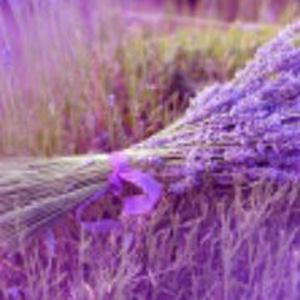 zw-Lavender