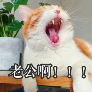 猫腻NwNw
