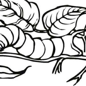 冬眠的丨毛毛虫
